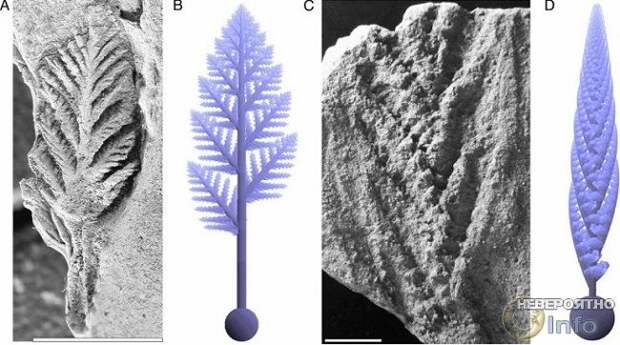 Древнейшие животные планеты были похожи на растения