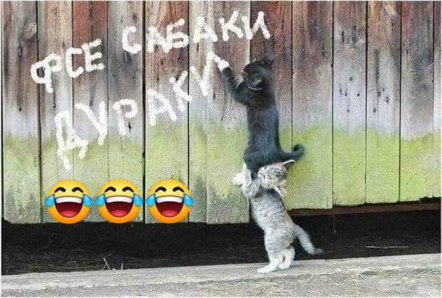 Подборка анекдотов и шуток в картинках для яркого настроения