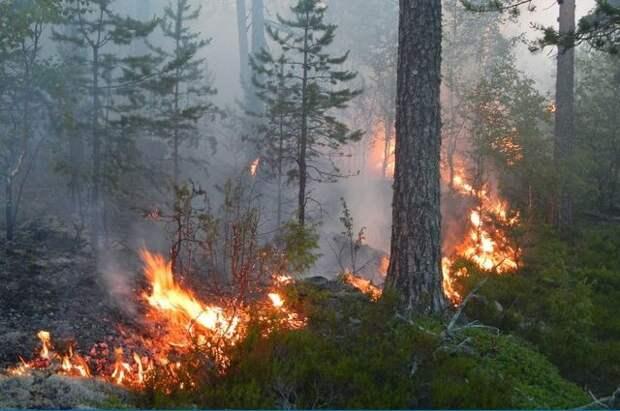 В России тушат лесные пожары на площади 44,2 тыс. га