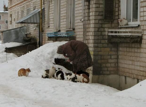А вот ещё Хвостатые, братья наши меньшие, город, кот, кошка, улица, уличные кошки, эстетика