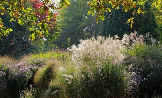 Злаковый сад – прерия на участке своими руками