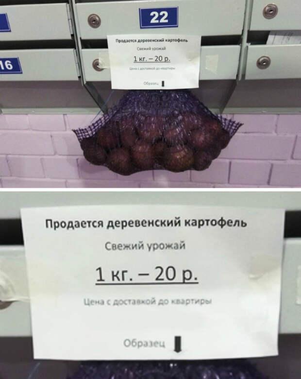 Пробник картошки.