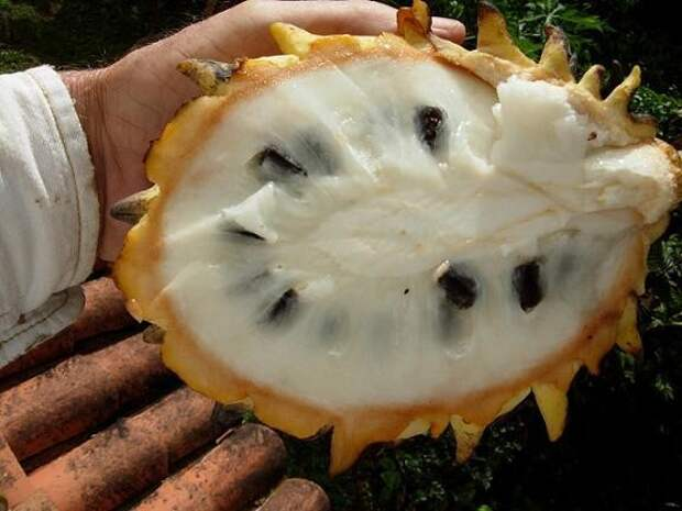 Бириба еда, фрукты, экзотика