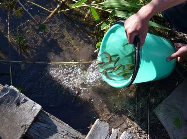 Как зарыбить пруд