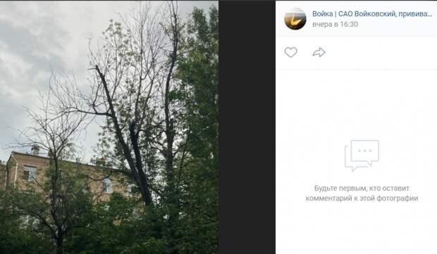 На удаление сухих деревьев во дворе на Ленинградке подан запрос на получение порубочного билета