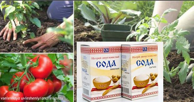 13 идей о том, как использовать соду в своем домашнем саду