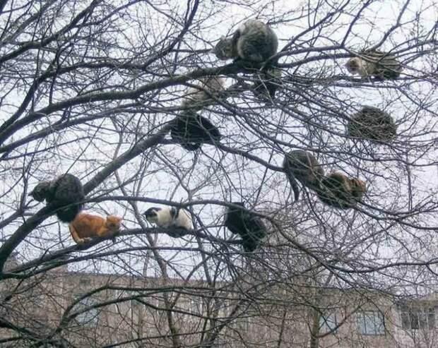 Это наше фамильное дерево. Здесь выросли наши дети, внуки… весна, коты, прикол