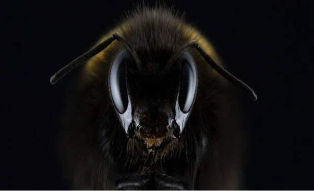 В Нидерландах пчел обучили диагностировать COVID-19