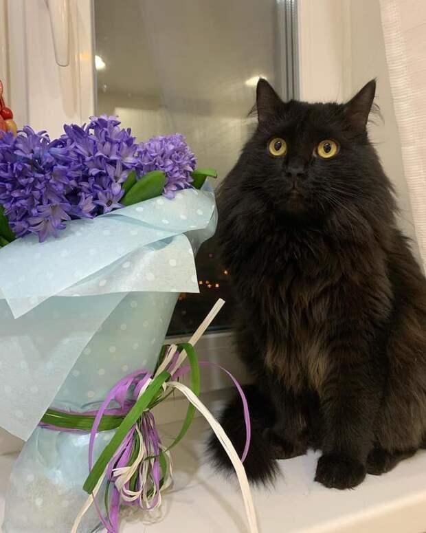 Жил да был черный кот...