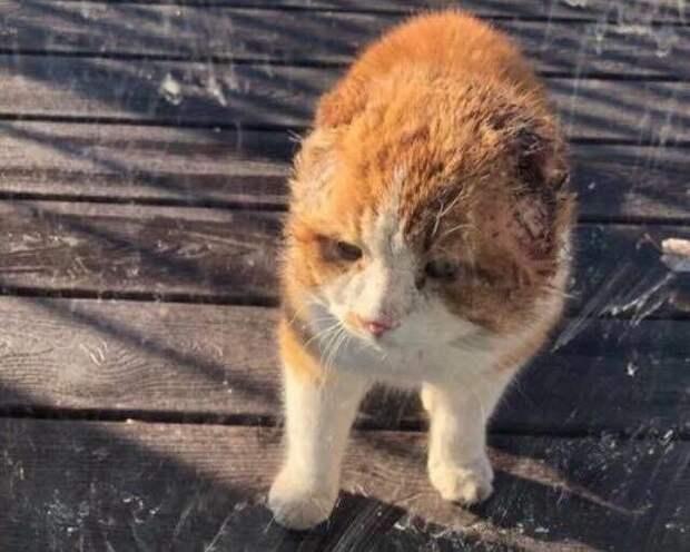 Как потрепанный безухий бродячий кот превратился в ласкового неженку