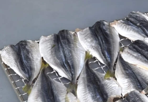 Вялим рыбу дома без хлопот: способ как на Севере