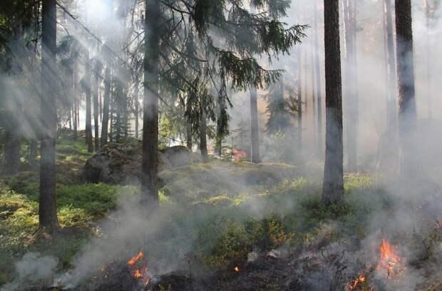 Под Ялтой горело 2,5 гектара заповедного леса