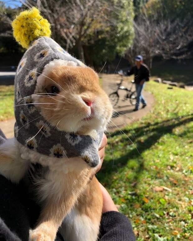 25 фото из жизни милейших кроликов, которых вам захочется срочно тиснуть