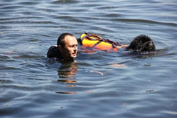 На собственном опыте: статист МКОО «Сотерн» рассказала, как проходят тренировки собак-спасателей