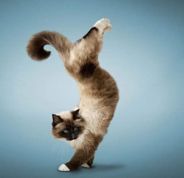 4. Кошка всегда грациозна, даже когда просто сидит на диване. жены, интересное, кошки, юмор