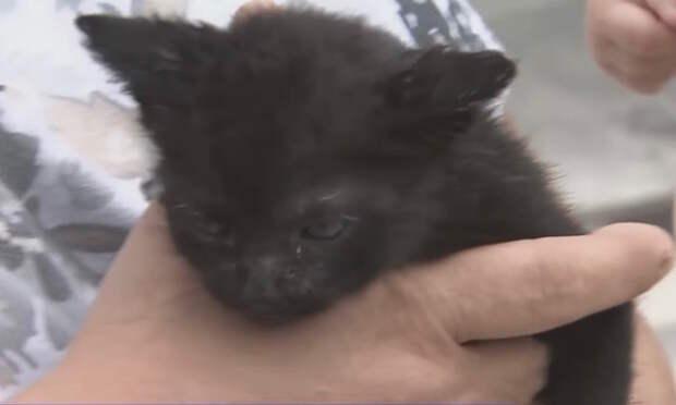Этот котенок провел два дня в ловушке, но его спасли