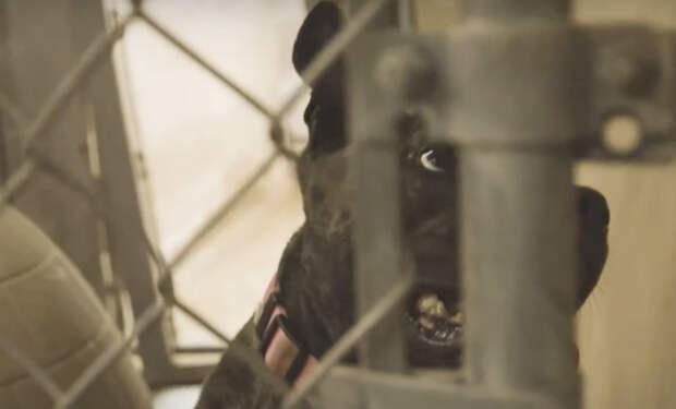 Собака находилась в приюте 6 лет, а потом ее решили забрать. Мужчина снял реакцию на видео