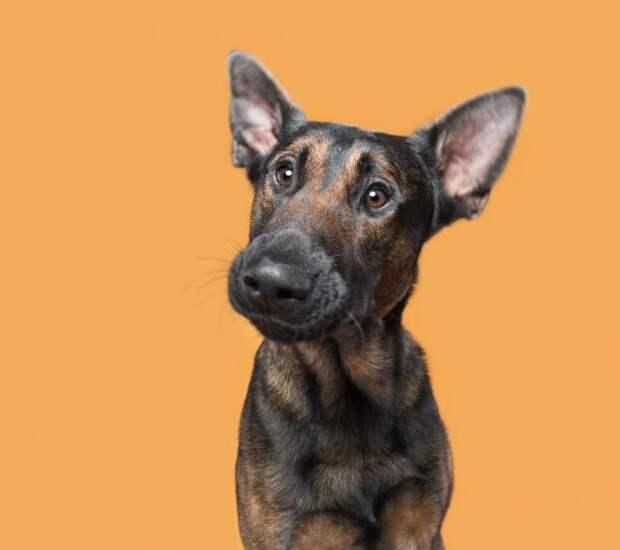 Эмоциональные и веселые собачки из нашей жизни