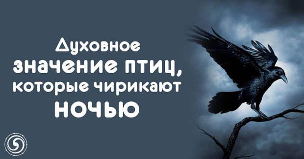 Духовное значение птиц, которые чирикают ночью