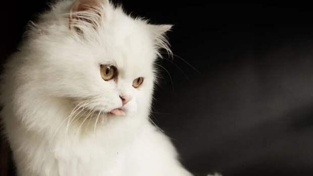 Вакцину для профилактики аллергии на кошек начнут испытывать в России