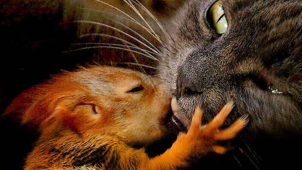 Кошка приняла и выкормила бельчат вместе со своими котятами (+фото)