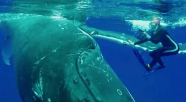 Огромный кит толкал женщину носом, потому что спасал от более страшного зверя