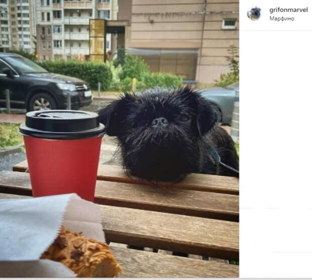 Фото дня: собака из Марфина сделала перерыв на кофе