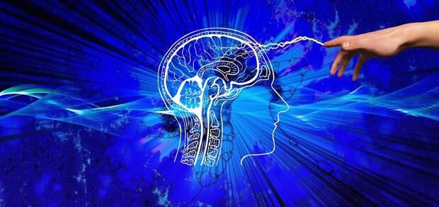 Диетолог назвала идеальные для работы мозга продукты