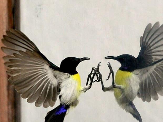 Народные приметы и поверья про птиц
