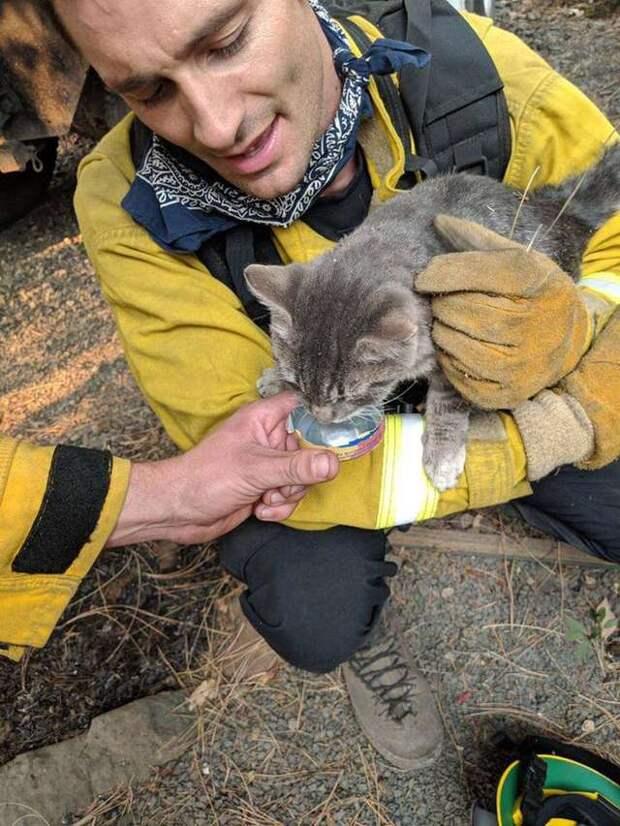 Спасатели помогли коту во время пожара, а теперь питомец от них не отходит