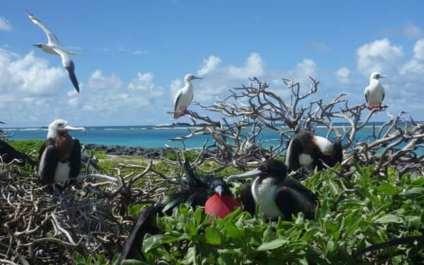 Национальный морской памятник Папаханаумокуакеа    интересное, мир, национальный парк