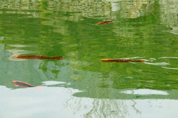 Симферополь выкачивает из-под земли до 95 тысяч кубов воды в сутки