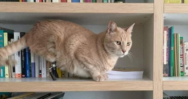 Новая звезда Инстаграма — кот-киборг Вито, которому очень повезло