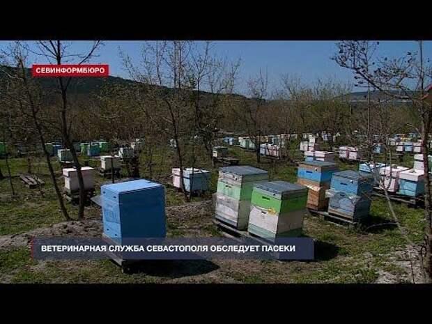 Проснувшихся севастопольских пчёл обследуют ветеринары