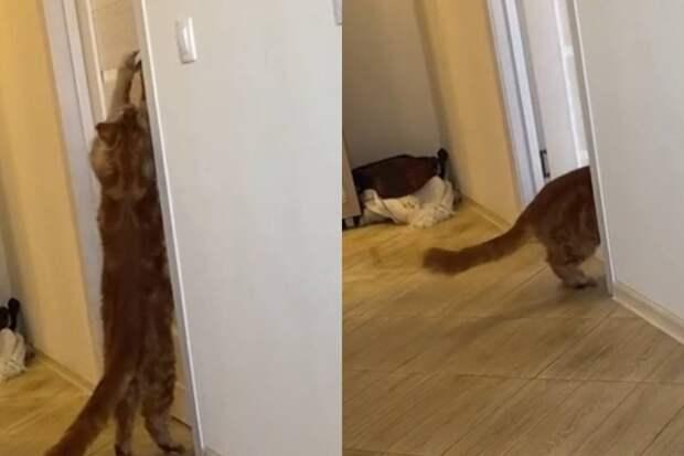 «Открой дверь»: говорящий мейн-кун попал на видео и заставил Сеть хохотать