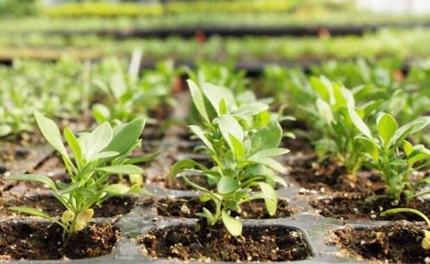 Высадка рассады овощных и декоративных культур – благоприятные дни в 2021 году