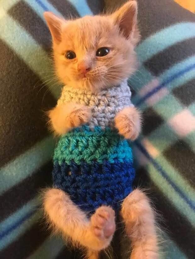 Волонтеры сделали все возможное, чтобы спасти обреченного котенка