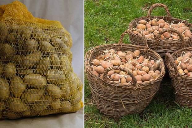 картошка в сетке