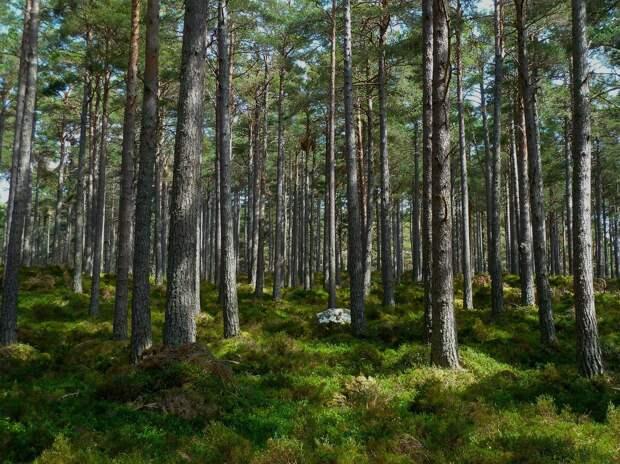 Развожаев пожертвует тысячами деревьев ради медицинского кластера