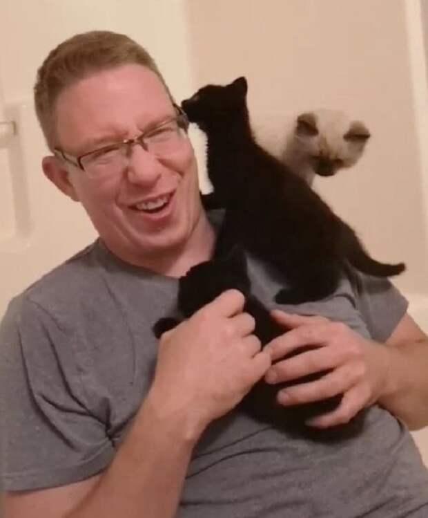 Котята и мужчина
