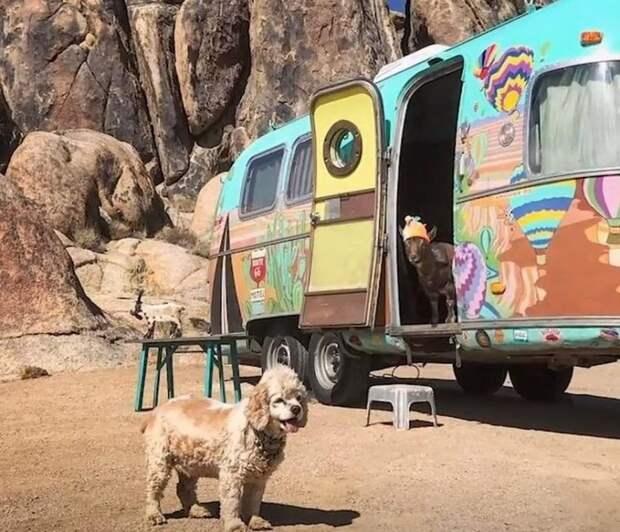 Приключения Френки и Мегги или как коза и собака путешествовали
