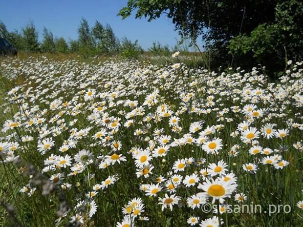 Лето в Удмуртии стоит ждать лишь к концу июля