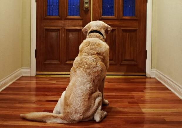 Ваша собака страдает от разлуки?
