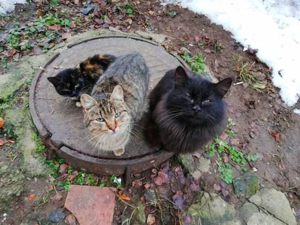 Фотография друзей Хвостатые, братья наши меньшие, город, кот, кошка, улица, уличные кошки, эстетика