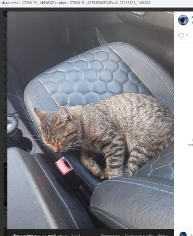 Кот с подарками от жителей Некрасовки отправился в новую семью