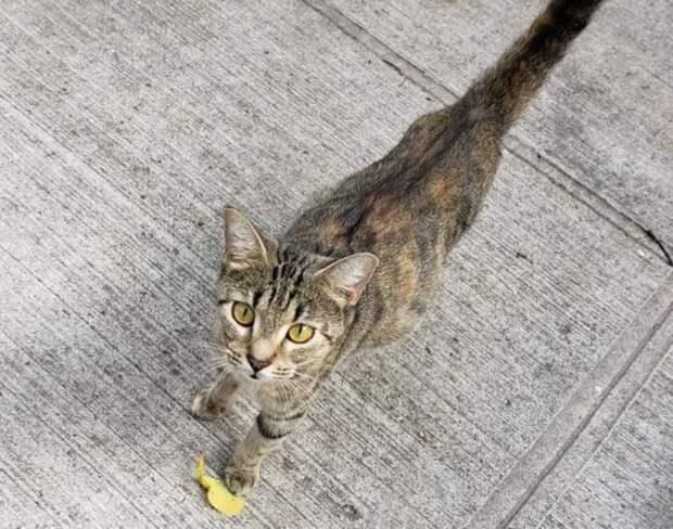 Кошка пришла к правильному человеку, когда искала для своих котят билет в жизнь