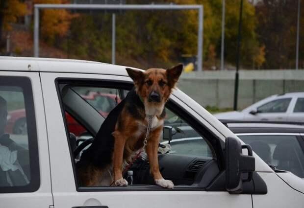 Хозяева оставили собаку с чужими людьми на месяц. Она все равно ждала, что за ней вернутся
