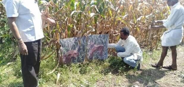 Фермер сидит