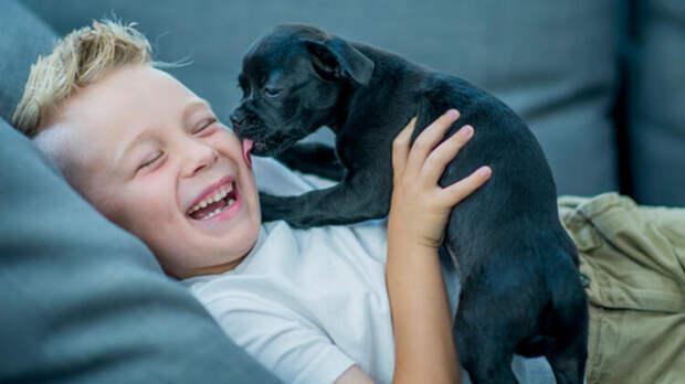Смыслы, скрывающиеся за странным поведением вашей собаки