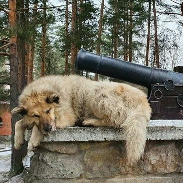 Бездомный пёс Кефир победил в одной из номинаций рейтинга лучших собак России